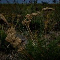 Байкальские растения :: Olesia Dildina