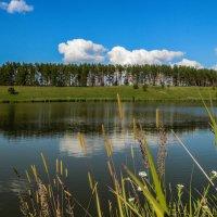 Пруд :: ирина лузгина