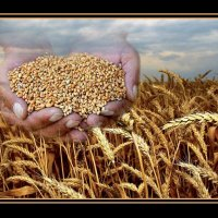 Урожай :: Андрей Мартынюк