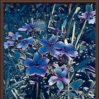 "картина ""Цветы при лунном цвете"" :: Владимир Бровко"