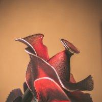 роза из капрона :: Ольга (Кошкотень) Медведева