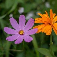 Садовые цветы :: Павел Харлин