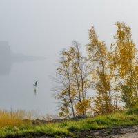 Посадка на воду :: Владимир Колесников