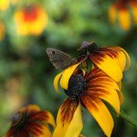 Нектар и сладок и прекрасен :: Марина Щуцких