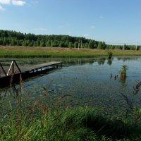 Мостки на Вороновских прудах :: елена