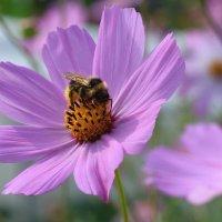 Пчелиная работа :: Владимир Гришин