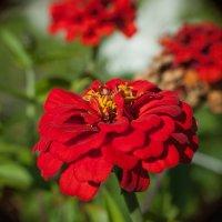 Красный... :: Игорь Николаич