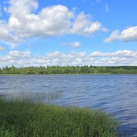 Вепсский лес. Пашозеро :: Александр Алексеенко