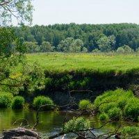 Старинная речка Иста :: Дмитрий Звонарев