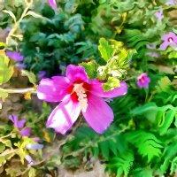 Сиреневый цветок :: Анатолий Чикчирный