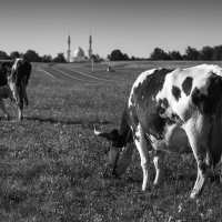 Болгар. Сельская жизнь. :: Марат Закиров