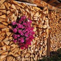 и на дровах растут цветы :: Elena Wymann