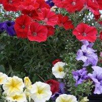 Цветы  у  подъездов... 2 :: Валерия  Полещикова
