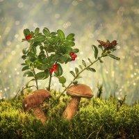 Из серии Лесные истории :: Ирина Приходько