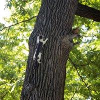 Кот прирожденный охотник :: Михаил Рехметов