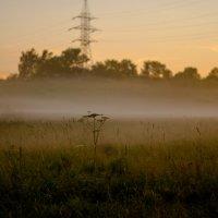 Туман :: Валерия Святогорова