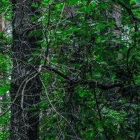 в лесу :: Юлия Денискина