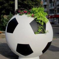 Футбол и цветы :: Нина Бутко