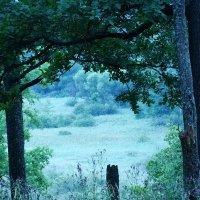 природа :: Дарина Серикова