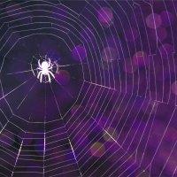 павучок :: Ліля Гуцол