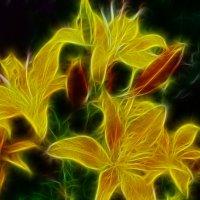 Жёлтые лилии :: Андрей Гладкий