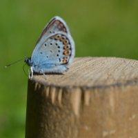 бабочка :: Татьяна Могилина