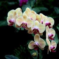 Орхидея в парке Утопия :: Владимир Сарычев