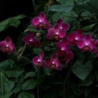 Огоньки Орхидеи (парк Утопия) :: Владимир Сарычев