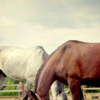 Сокол и Буян :: Катрин _