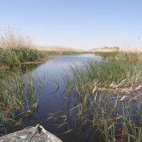 Дельта реки Волги :: Светлана Боброва