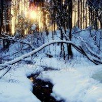 Зима - 2 :: Михаил Власов