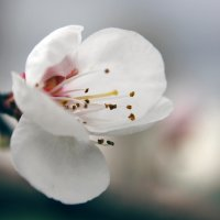 Весна :: Ольга Сафонова