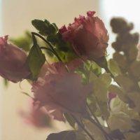 Цветы :: Наталья Сапанюк