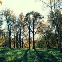 лес :: Анна Сидорова