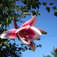 Цветочек :: Люба Гительман