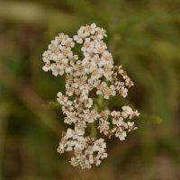 цветок :: Динар Зайдуллин