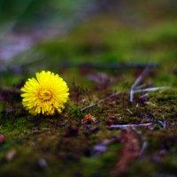 цветок :: Анастасия T