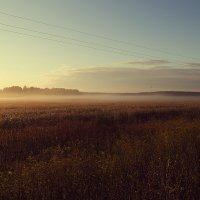утренний  туман :: Ольга Афанасьева