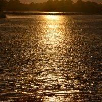 золотая вода :: Наталья Соловей