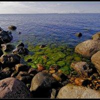Балтийский берег. :: Jossif Braschinsky