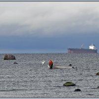 Рыбак и лебедь. :: Jossif Braschinsky