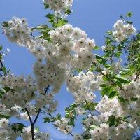 Все цветет и зеленеет! :: Ростислав