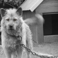 Собачья жизнь :: Наталия Дмитренко