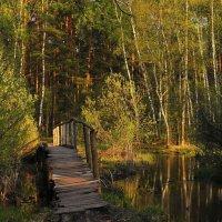 Лесные тропинки :: temo tega