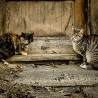 У старого дома кошки сидели..... :: Елена Kазак