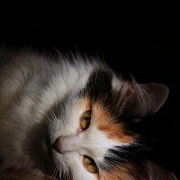 Кошка :: Оля Кузнецова