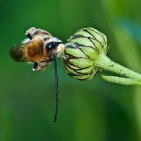 Бджёл :: Александр Земляной