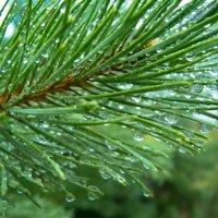 После дождя... :: Дмитрий Янтарев