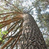 всего лишь дерево... :: Татьяна