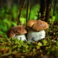 Милая парочка, желанная парочка для грибника. :: Елена Kазак